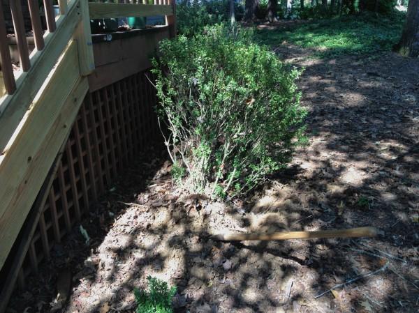 Removing some sad box woods.